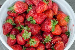 Olivia's Strawberries2